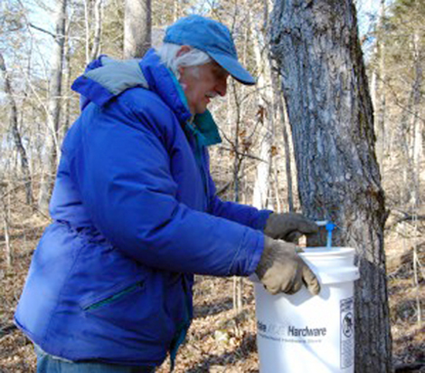 MU professor harnesses Missouri trees to make his own maple syrup