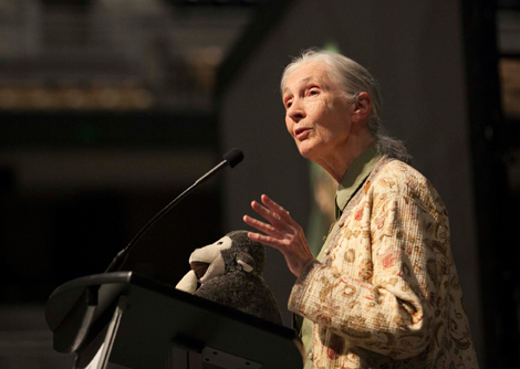 Jane Goodall Young